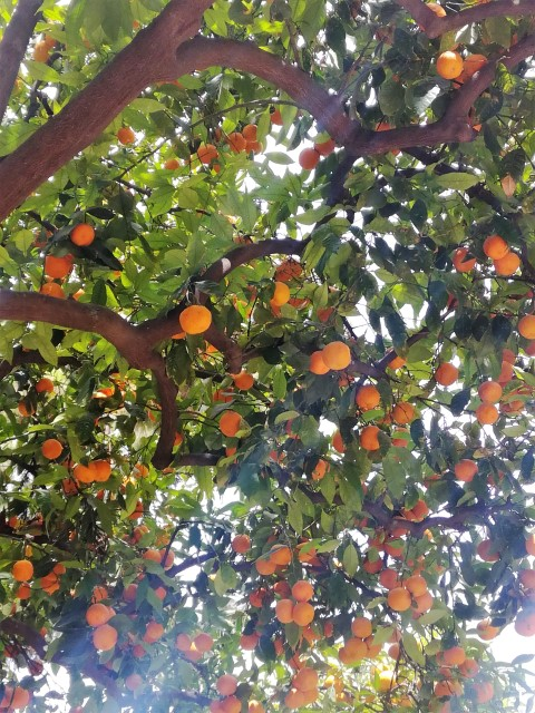 valencia - aranci