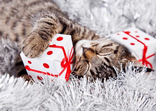 Natale da sola gatto